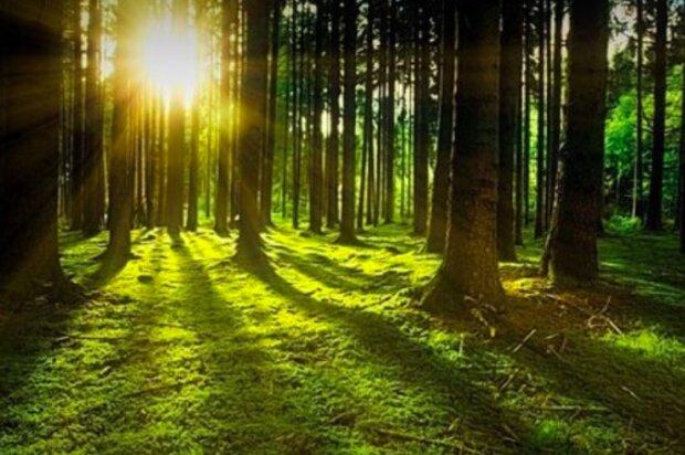 Niesamowite znalezisko w lesie / themayor.eu