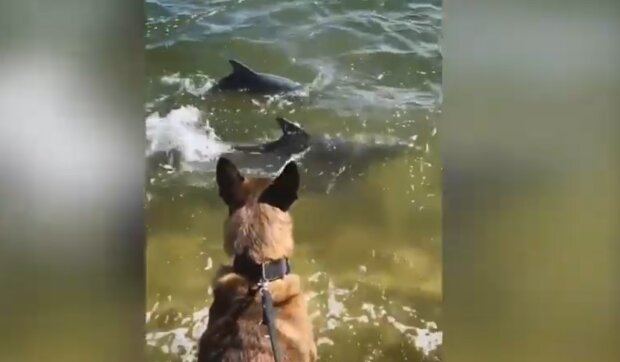 Pies Mako i delfiny/ YouTube @Short Videos