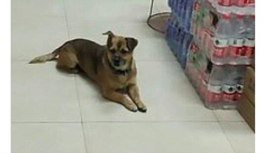 Wyjątkowy przejaw psiej wierności. Pies czekał przez trzy miesiące przed szpitalem na właściciela. Co stało sie dalej?