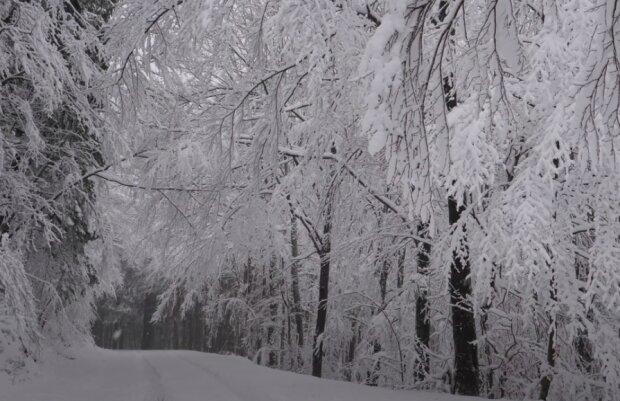 Sypnęło śniegiem! / YouTube