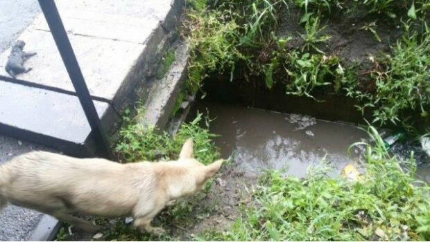pies zaczął wołać o pomoc przechodniów, screen Google
