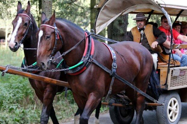 Konie do Morskiego Oka. Źródło: rmf24.pl