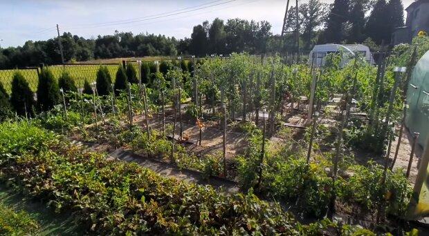 źródło: YouTube/ Dzień z życia ogrodnika amatora