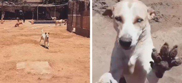 Mężczyzna został najlepszym przyjacielem niewidomego psa ze schroniska i jest to bardzo wzruszające