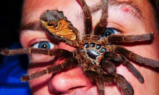Gigantyczny pająk  przestraszył mieszkańców jednego z polskich miast. Czy jest zagrożeniem dla ludzi