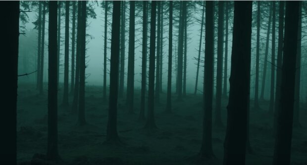 Taki widok może przyprawić o strach. W jednym z lasów natknięto się na palce umarlaka