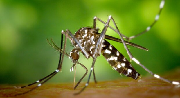 Nowe komary zaatakują Polskę? / fox17online.com