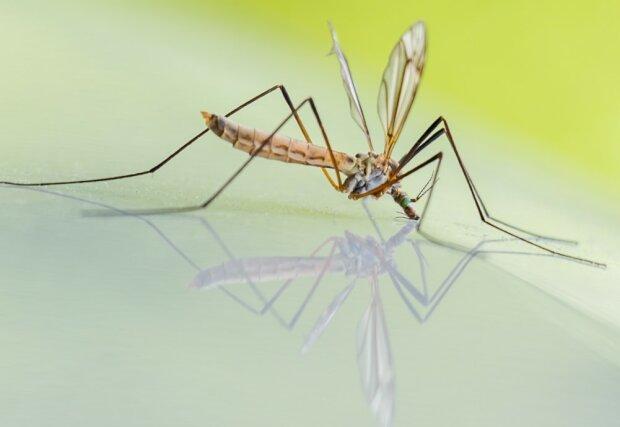 Mało komarów w tym roku!/screen Pixnio
