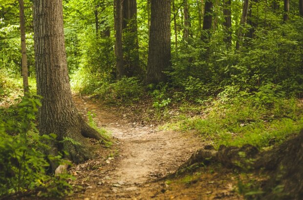 Grzybiarz natknął się w polskim lesie na rzadki gatunek grzyba. Szybko sfotografował okaz i pochwalił się na Facebooku