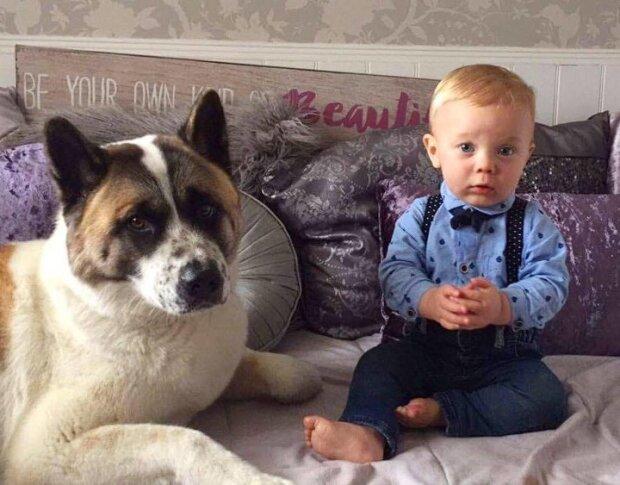 Ten pies uratował matkę i dziecko. Chłopiec urodził się zdrowy tylko dzięki jej instynktowi