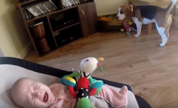 Dziecko rozpłakało się, kiedy straciło zabawkę. Reakcja psa była niesamowita