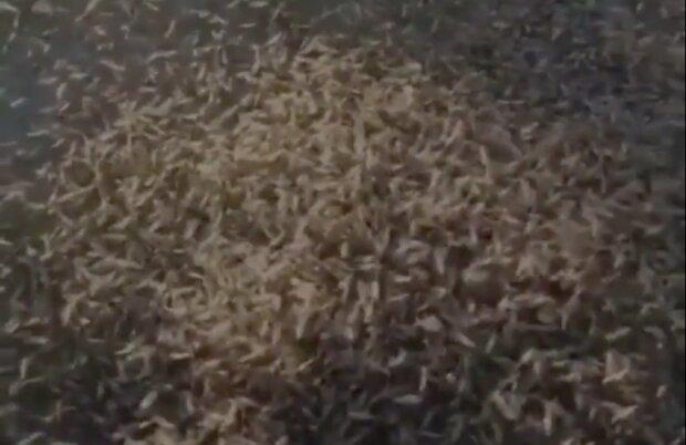 Sceny jak z Biblii. Horda owadów zawładnęła miastem. Są nagrania