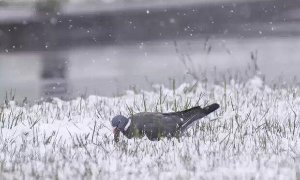 Pogoda szykuje niespodzianki. Źródło: pomorskie.naszemiasto.pl