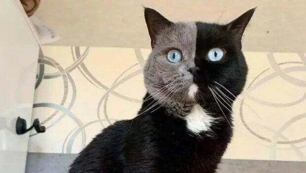 Kotek o najrzadszym zabarwieniu, sceen Google