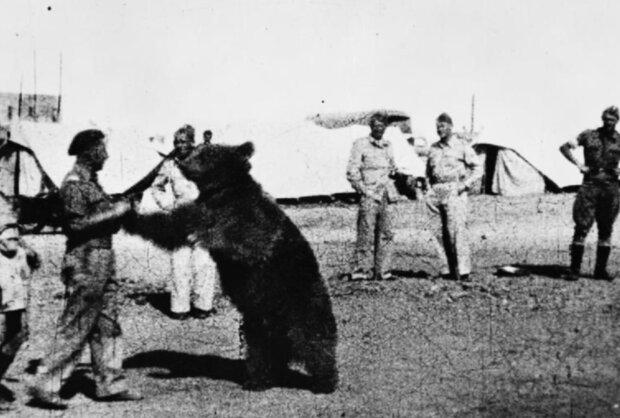 Niezwykła historia niedźwiedzia Wojtka. Żołnierza armii gen. Andersa