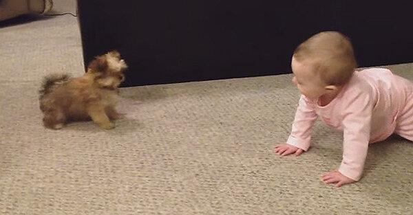 Jak rozmawia niemowlę ze swoim ukochanym szczeniakiem? Zobacz! Nie przestaniesz się śmiać