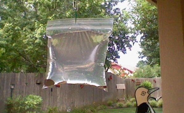 Najlepsze sposoby na pozbycie się much z domu. Tanie i naturalne środki przeciw muchom