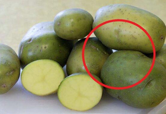 Zielona część ziemniaka może mieć negatywny wpływ na zdrowie. Zawsze warto ją wyrzucać