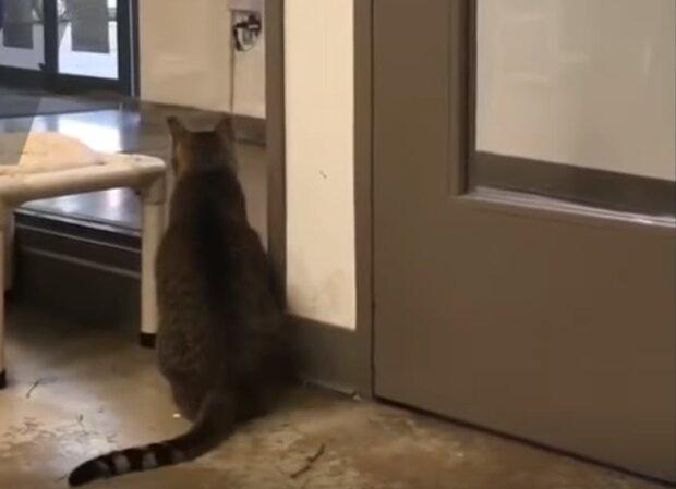 Kot, który opanował ludzkie umiejętności! Trudno uwierzyć, co robi w schronisku