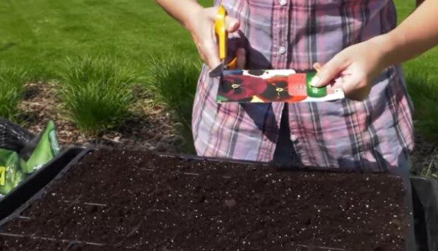 Prace ogrodnicze w czerwcu. Źródło: Youtube
