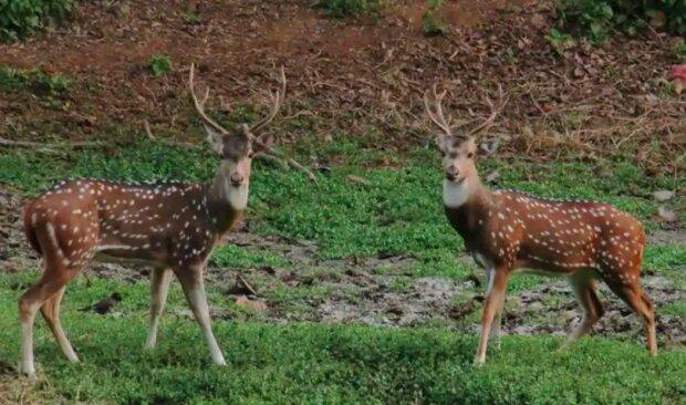Zwierzęta sąniesamowite! / hindustantimes.com