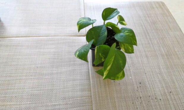 rośliny,screen YT