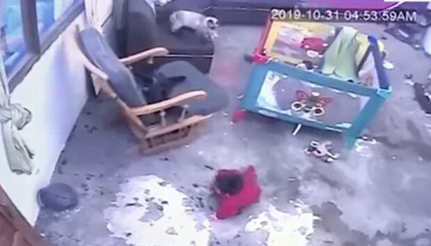 Kot uratował życie małemu dziecku! Nagranie, które wbija w fotel [WIDEO]