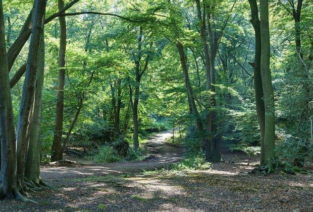 """""""Palce diabla"""" w polskim lesie. To bardzo niezwykłe znalezisko"""