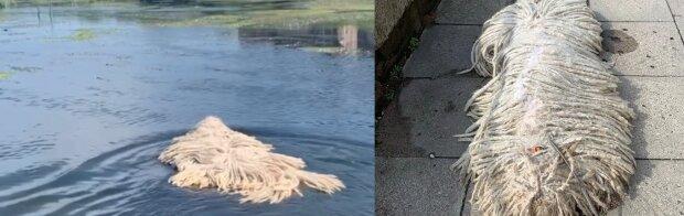 Na wodzie unosiły się dziwne sznury. Okazało się, że to prawdziwe zwierzątko! Nagranie podbija internet