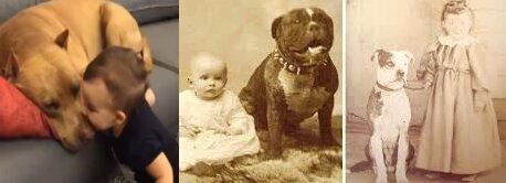Dziecko, które bawiło się z Pitbullem. To, co zrobił ten pies jest nie do pomyślenia
