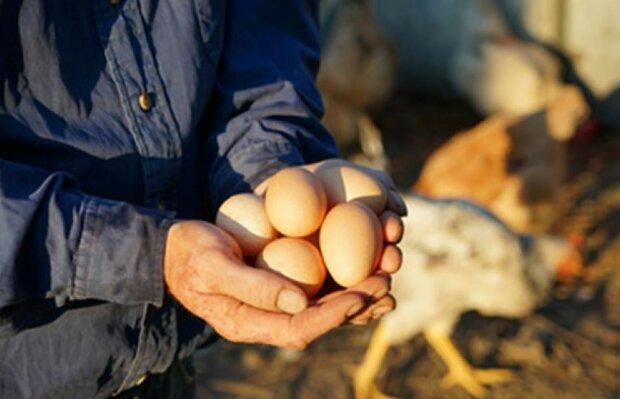 Ognisko ptasiej grypy w województwie łódzkim. Drób i jaja mogą być zakażone