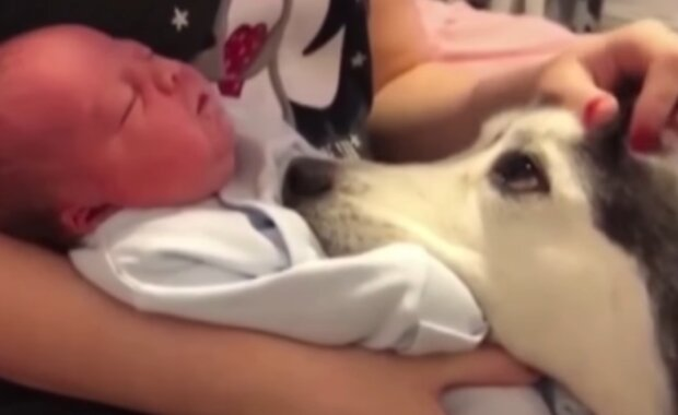 Pewien pies momentalnie zapałał miłością do dziecka swojej rodziny. Serce mięknie, gdy ogląda się pełen emocji filmik