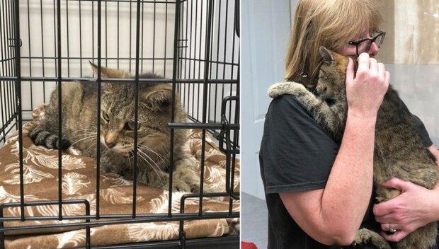 W Nowym Jorku był kot, którego właściciele stracili 11 lat temu