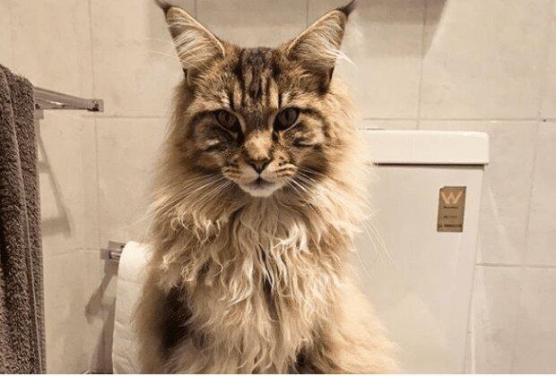 """Nad tym pytaniem zastanawiają się wszyscy: """"Dlaczego nasz pupil podgląda nas podczas wizyty w toalecie?"""". Odpowiedz na to pytanie jest zaskakująca"""