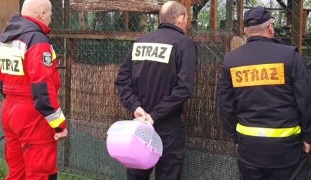 Strażacy pomogli małej sowie. Źródło: tvn24.pl