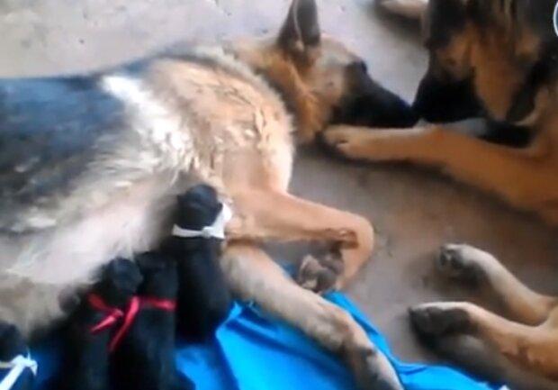 Prawdziwa miłość zdarza się również wśród zwierząt. To video jest tego najlepszym przykładem