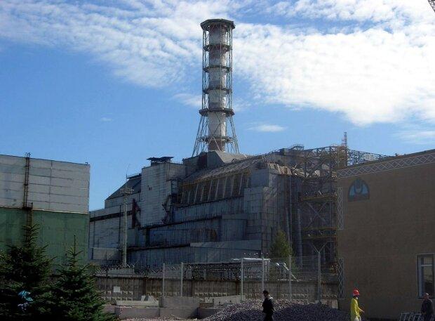Wielkie odkrycie w Czarnobylu. Kamery zamontowane w lesie pokazały coś niezwykłego