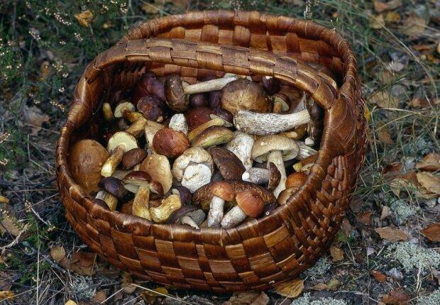 Wyszedł na grzyby, znalazł coś zupełnie innego. Niesamowite odkrycie w polskim lesie