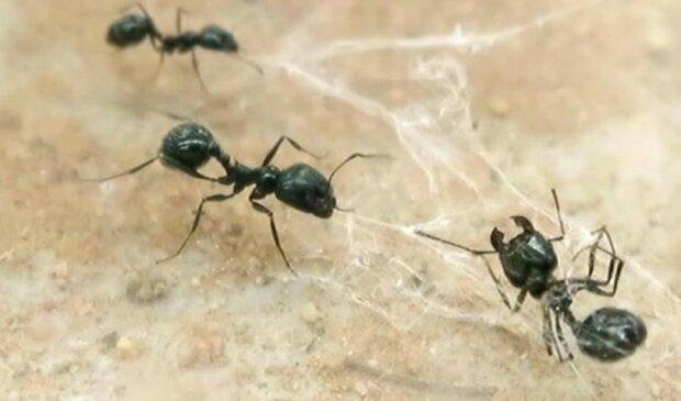 Mrówki screen Dziennik Naukowy