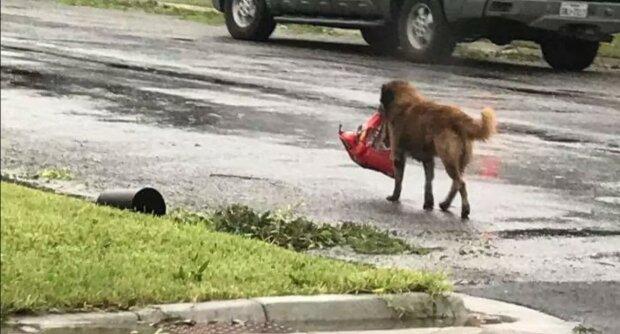 Pies znalazł koc, w którym znajdowało się dziecko, na wysypisku. To, co stało się później, zwaliło wszystkich z nóg