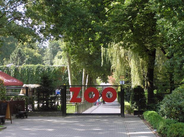 Kraków: Ogród Zoologiczny zaprasza zwiedzających. W lato będzie można zobaczyć tam ponad tysiąc zwierząt