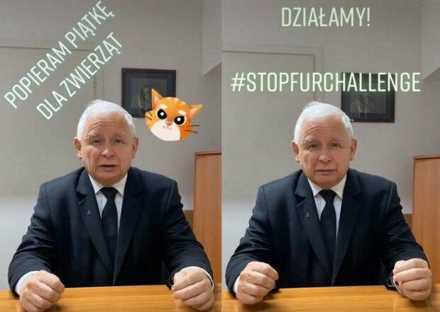 Zaskakujące nagranie z Jarosławem Kaczyńskim. Prezes PiSu na TikToku