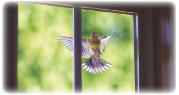 Co to znaczy, gdy ptak puka do okna, screen Google