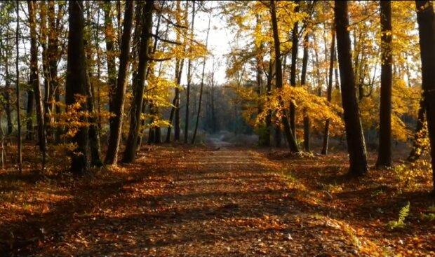 Złota polska jesień na pewno będzie jeszcze do końca października. Co meteorolodzy przewidują na listopad?
