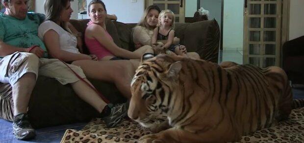 Dzikie zwierzęta w domu/ screen youtube