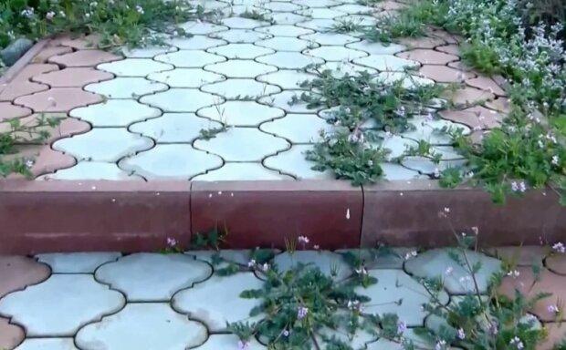 Jak pozbyć się trawy na ścieżkach ogrodowych, screen Google
