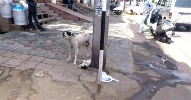 Bezpański pies, screen Google