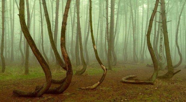 """Amerykanie i Brytyjczycy nie mogą wyjść z podziwu. Polski las oficjalnie został uznany za """"magiczne miejsce"""""""