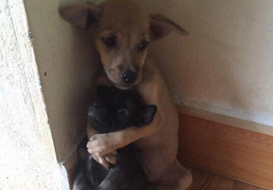 Wzruszające zdjęcia znalezionych szczeniaczków. Znalazły opiekę i dom