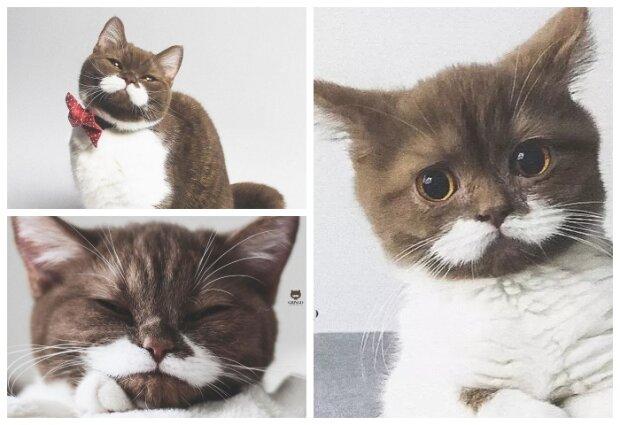 Gringo. Kot, który skradł nasze serca. Czy te oczy mogą kłamać? Chyba nie